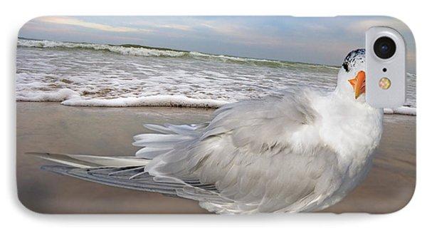 Royal Tern IPhone Case by Betsy Knapp