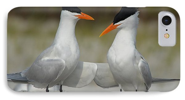 Royal Terns IPhone Case
