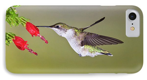 Ruby-throated Hummingbird (archilochus IPhone Case by Larry Ditto