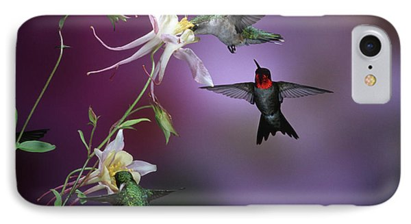 Ruby-throated Hummingbirds (archilochus IPhone Case by Richard and Susan Day