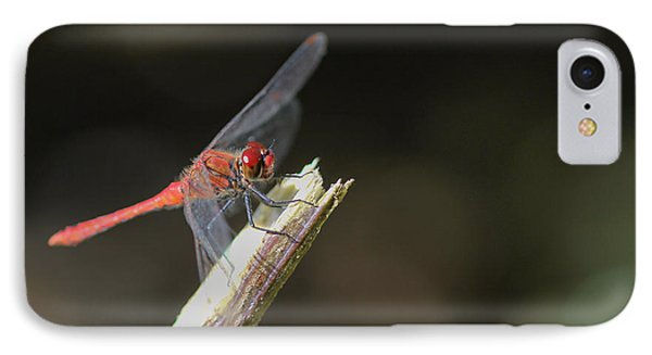 IPhone Case featuring the photograph Ruddy Darter Dragonfly - Sympetrum Sanguineum by Jivko Nakev