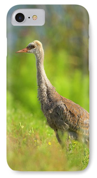 Sandhill Crane Chick Resting In Grass IPhone Case