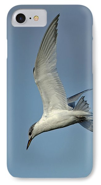 IPhone Case featuring the photograph Sandwich Tern by Paul Scoullar