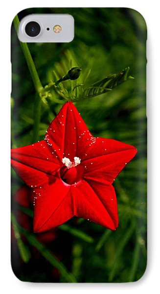 Scarlet Morning Glory IPhone Case
