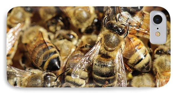Seattle Honeybees In Beehive IPhone Case by Matt Freedman