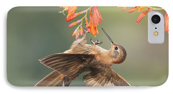 IPhone Case featuring the photograph Shining Sunbeam Hummingbird by Dan Suzio