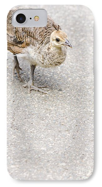 Small Baby Peacock Roaming On Pavement IPhone Case by Jorgo Photography - Wall Art Gallery
