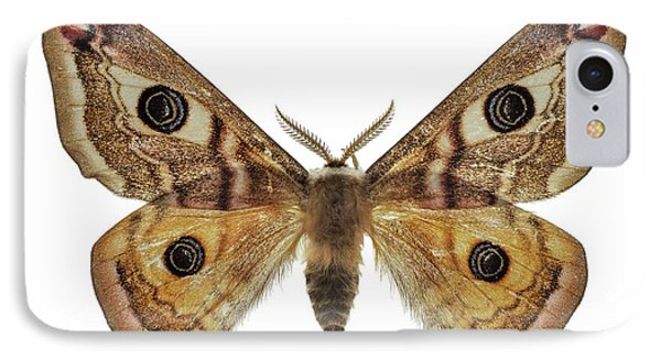 Small Emperor Moth IPhone Case by F. Martinez Clavel