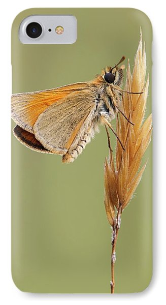 Small Skipper Butterfly IPhone Case by Heath Mcdonald