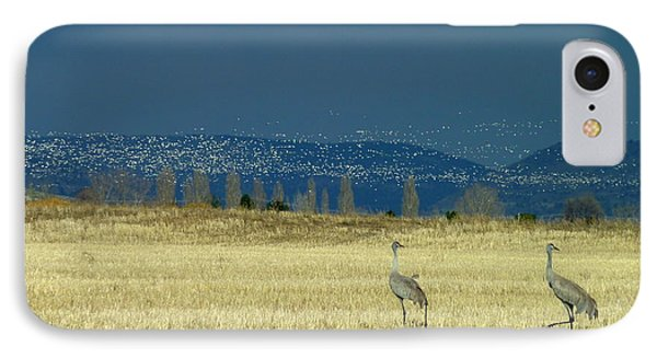 Snow Geese Invasion IPhone Case
