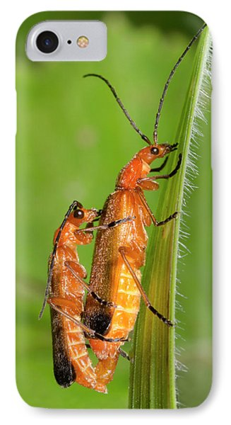 Soldier Beetles Mating IPhone Case