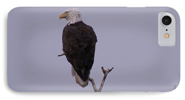 Solo  Bald Eagle IPhone Case by Mary Mikawoz