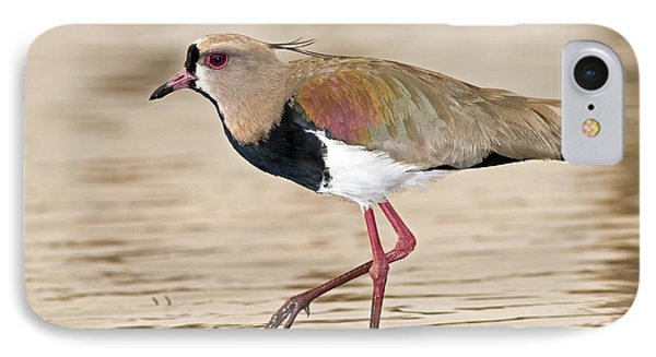 Southern Lapwing IPhone Case by Tony Camacho