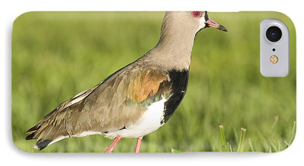 Lapwing iPhone 7 Case - Southern Lapwing by William H. Mullins