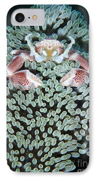 Spotted Porcelain Crab In Anemone Phone Case by Steve Jones