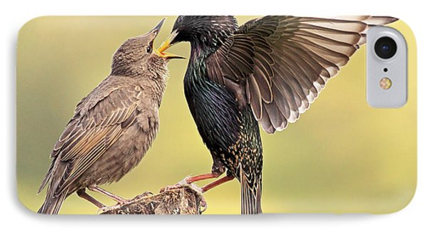 Starlings IPhone 7 Case by Grant Glendinning