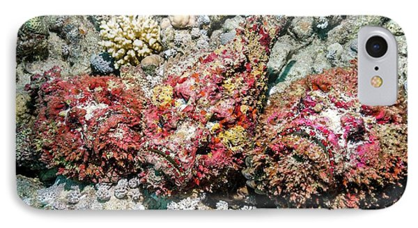 Stonefish Mating Congregation IPhone Case