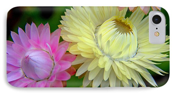 Strawflower Blossoms IPhone Case by A Gurmankin
