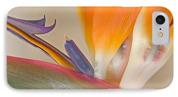 Strelitzia In Bloom, California, Usa IPhone Case by Panoramic Images