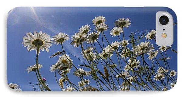 Sun Lit Daisies IPhone Case by Brian Roscorla