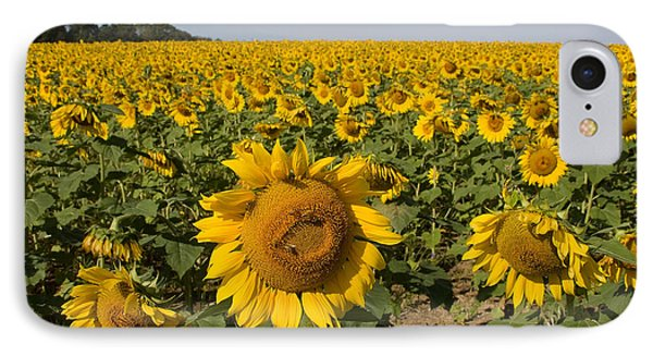 IPhone Case featuring the photograph Sunflower Fields by Chris Scroggins