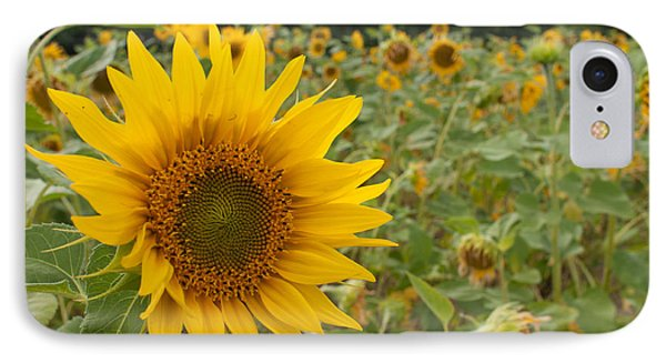 Sun Flower Fields IPhone Case