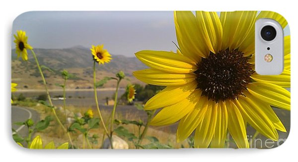 Sunflowers IPhone Case by Chris Tarpening