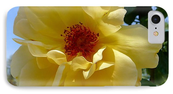 Sunny Yellow Rose IPhone Case