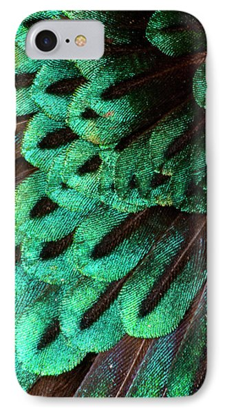 Superb Bird Of Paradise IPhone Case by Darrell Gulin