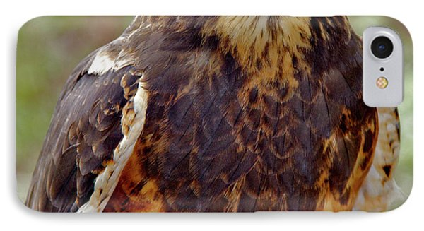 Swainson's Hawk IPhone Case by Ed  Riche