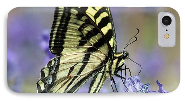 Swallowtail Butterfly IPhone Case by Jack Bell