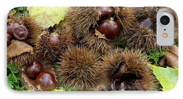 Sweet Chestnuts (castanea Sativa) IPhone Case by Bob Gibbons