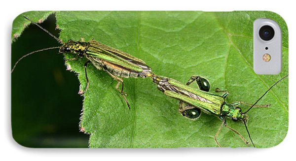 Swollen-thighed Beetles IPhone Case