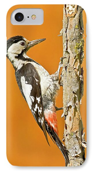 Syrian Woodpecker (dendrocopos Syriacus) IPhone Case by Photostock-israel