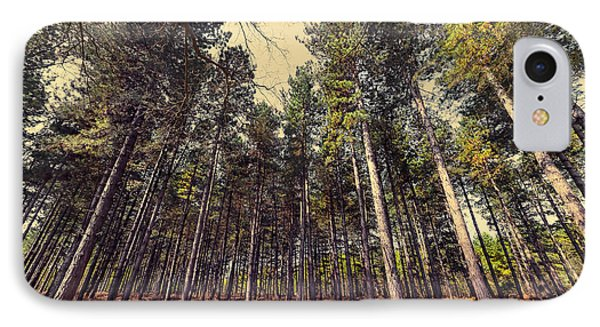Tall Trees IPhone Case by Svetlana Sewell