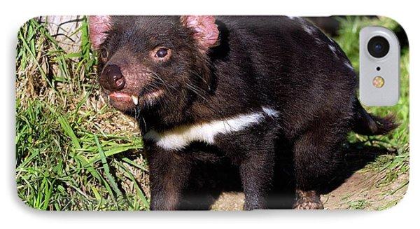 Tasmanian Devil IPhone Case by Bildagentur-online/mcphoto-schulz