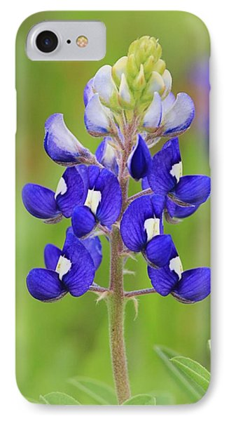 IPhone Case featuring the photograph Texas Bluebonnet by Elizabeth Budd