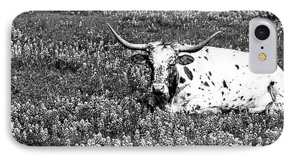 Texas Longhorn Cow Sitting On A Field IPhone Case by Panoramic Images