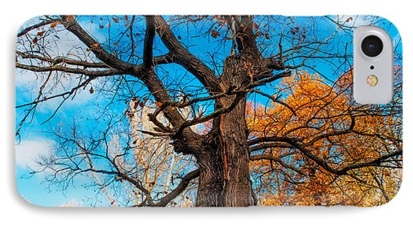 Texture Of The Bark. Old Oak Tree IPhone Case