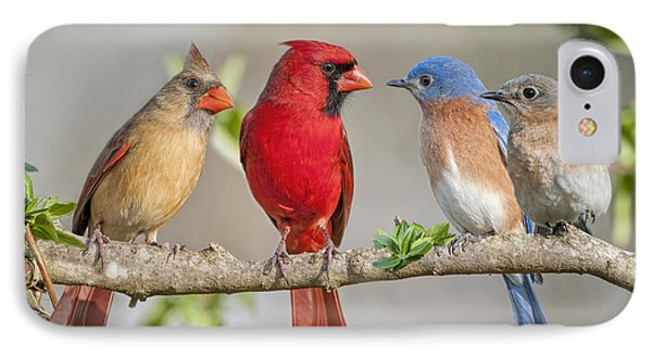 The Bluebirds Meet The Redbirds IPhone Case