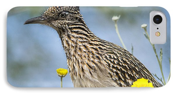 The Greater Roadrunner  IPhone Case by Saija  Lehtonen
