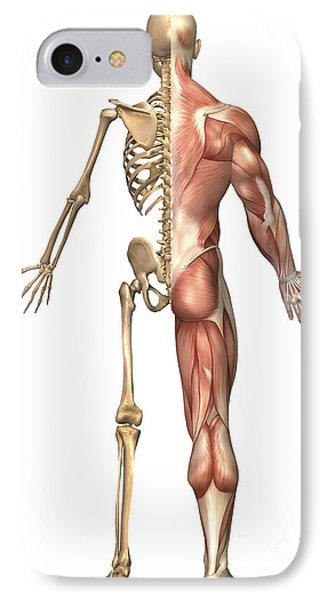 The Human Skeleton And Muscular System Phone Case by Stocktrek Images
