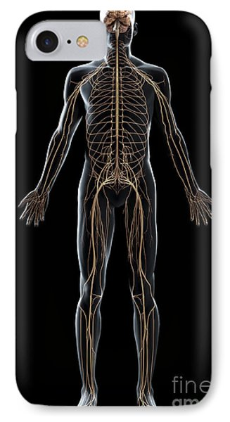 The Nerves Of The Body IPhone Case