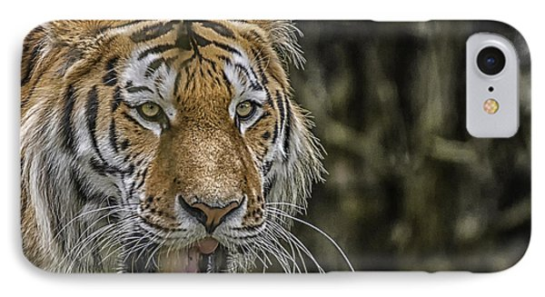 IPhone Case featuring the photograph Tiger by Chris Boulton