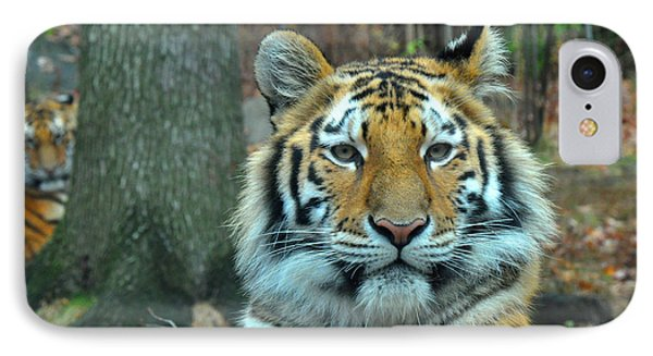 Tiger Bronx Zoo IPhone Case by Diane Lent