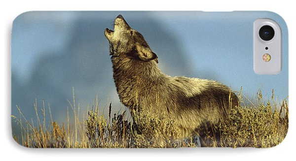 Timber Wolf Howling Idaho IPhone Case by Tom Vezo