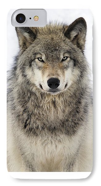 Timber Wolf Portrait IPhone 7 Case