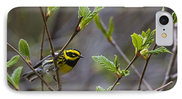 Townsends Warbler IPhone Case by Doug Lloyd