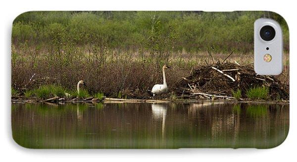 Trumpeter Swans Cygnus Buccinator Phone Case by Linda Freshwaters Arndt