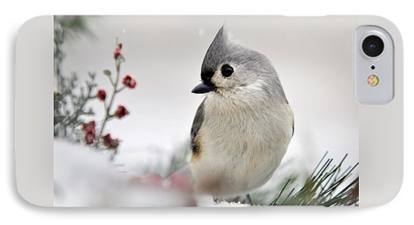 Tufted Titmouse Square IPhone Case by Christina Rollo